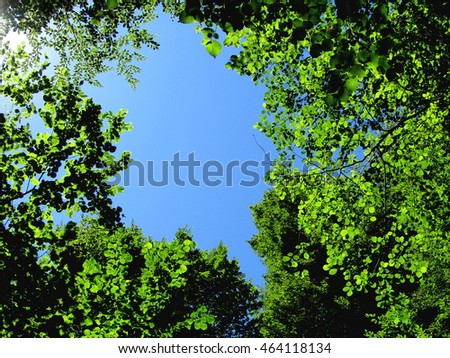 Blue sky through the green leaves of trees