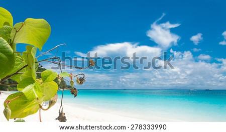 blue sky with beach sea and leaf - stock photo