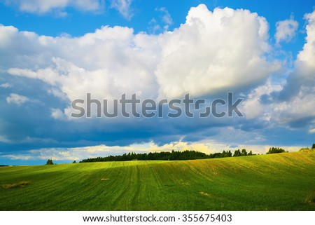 Blue sky with cumulus clouds and a field of green grass. Sunny day in the countryside. Summer landscape.
