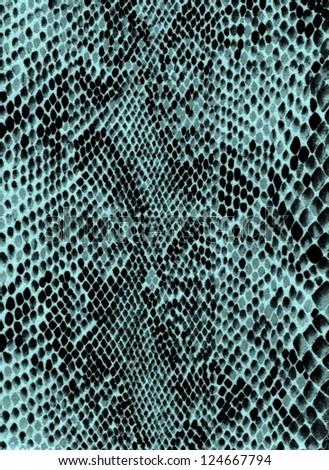 Blue snake skin - stock photo