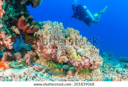 Blue Spotted Stingray and SCUBA diver - stock photo