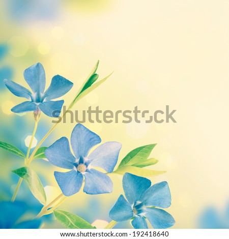 Blue spring flowers background