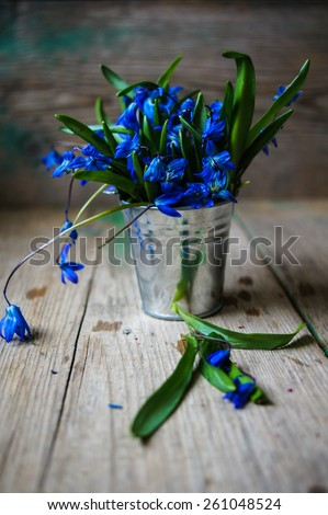 Blue spring flowers Scylla, bouquet on table - stock photo