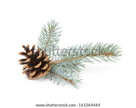 blue spruce twig with cone, isolated on white background - stock photo