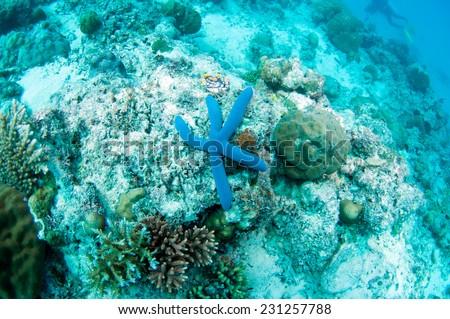 Blue starfish - stock photo