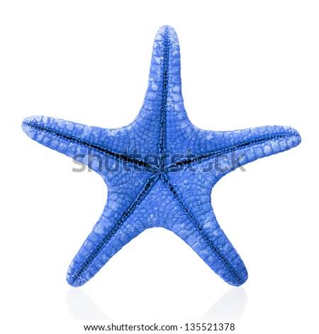 Blue starfish isolated on white - stock photo