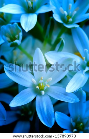 Blue summer flowers close-up - stock photo