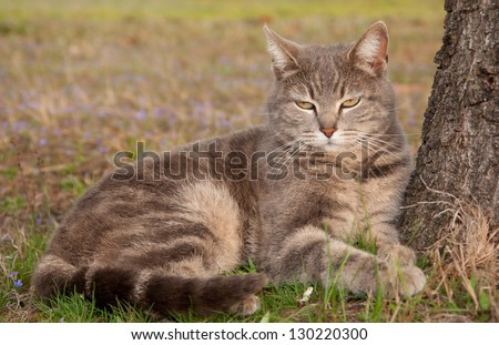 Blue tabby cat leaning on a tree in early spring