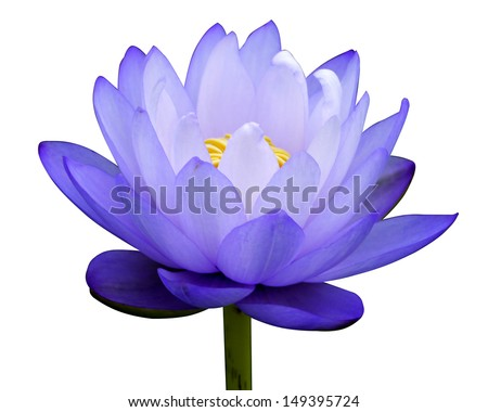 Blue water lily isolate on white background. - stock photo