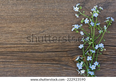 Blue wild flowers (forget-me-not) on old wooden background - stock photo