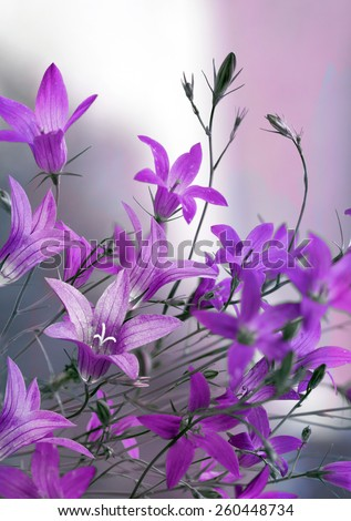 blue wildflowers - stock photo