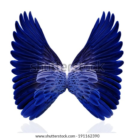 Blue wings isolated on white background. - stock photo