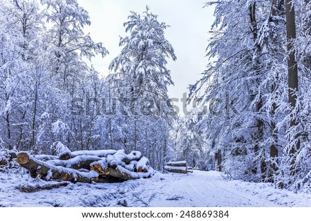 Blue Winter Forrest. Trees with snow in the black forest of Germany, glowing blue in the blue afternoon sky. Cold and fresh air - stock photo