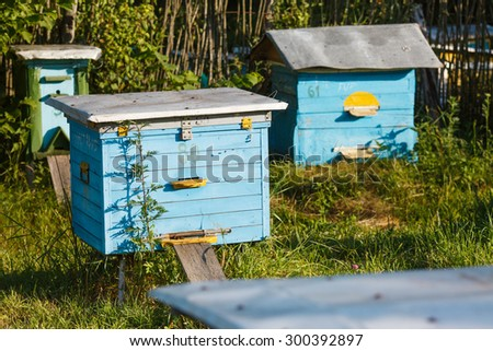 Blue wooden hive on the meadow with green grass on sunny summer day.