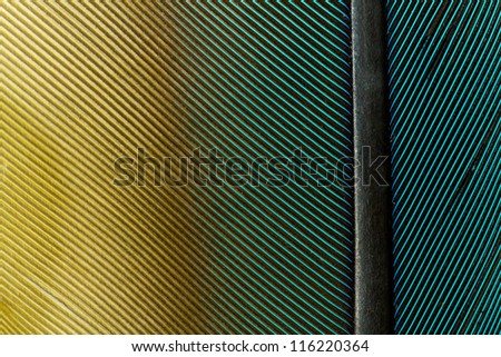 Blue Yellow Green Parrot Feather Close up Detail - stock photo