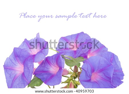 Bluebell flowers isolated on white - stock photo
