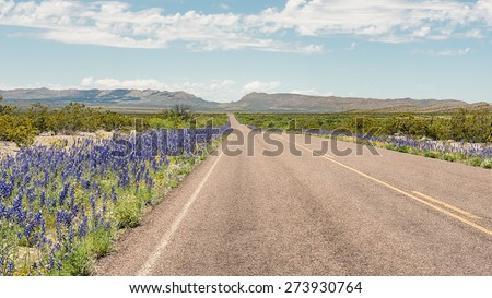 Bluebells along the roadside, Panther Junction-Persimmon Gap area, Big Bend National Park, Austin, Texas. - stock photo