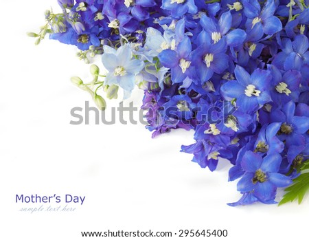 Bluebells background isolated on white with sample text - stock photo