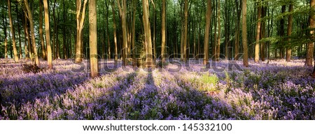 Bluebells in long tree shadows landscape - stock photo