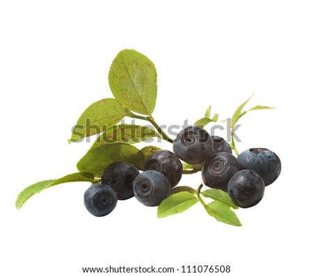 blueberries and leaves on a white background - stock photo
