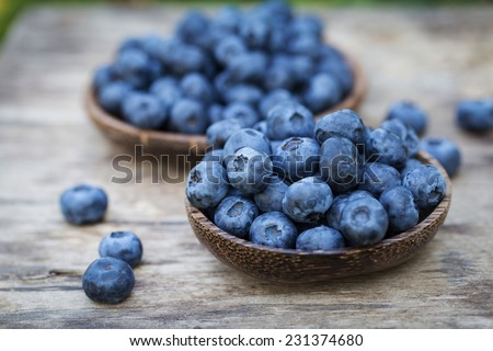 Blueberries in garden - stock photo