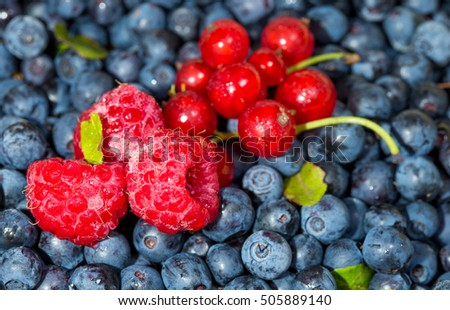 blueberries, raspberries and red currant for dessert
