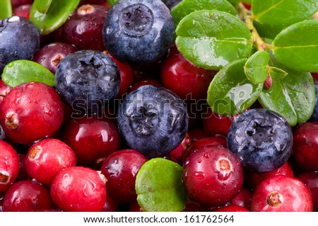 Blueberry and cowberry with green leaves with water drops - stock photo