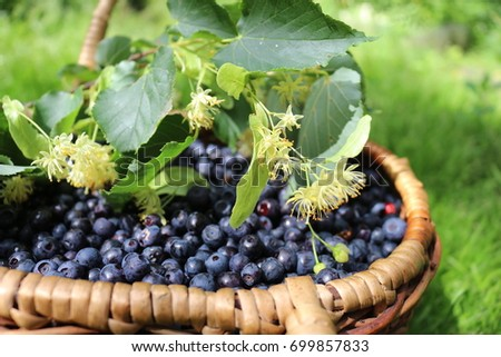 blueberry basket with lime blossom
