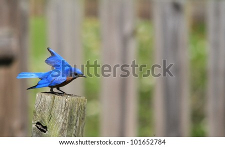 Bluebird on a summers day - stock photo
