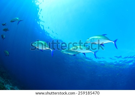 Bluefin Trevally fish - stock photo