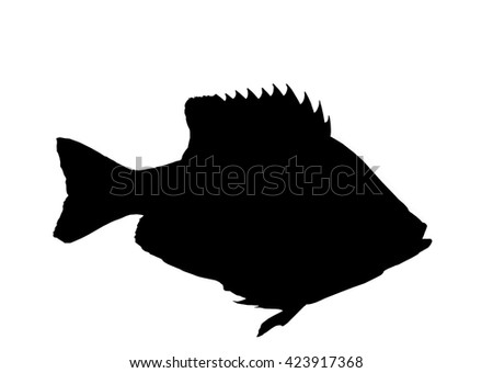 Bluegill sunfish silhouette isolated with path - stock photo
