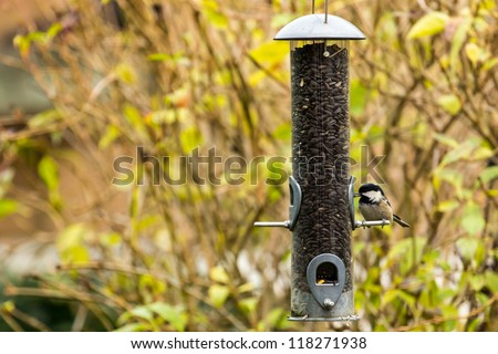 Bluetit on bird feeder - stock photo