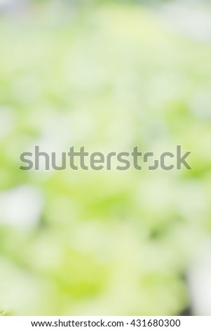 Blur abstract background light green hydroponic salad vegetable lettuce. Blurry view green oak, green cos, butter head, planting in farm in bokeh defocus. - stock photo