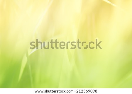 blur and soft focus of grass leaf with green color background - stock photo