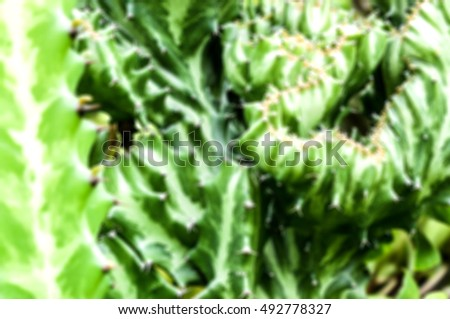 Blur Background Cactus Green .Space for text.