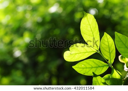 blur background from variety of green plant leaves shallow depth of field under shiny sunlight and environment in nature outdoor for relax mood backdrop and background - stock photo