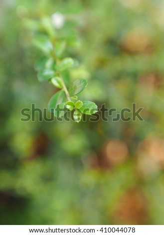 blur background from variety of green plant yellow leaves and shiny sunlight environment in nature outdoor for relax mood backdrop and background