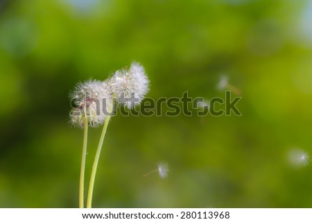 blur Beautiful grass flowers