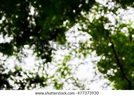 blur  big green tree in the forest background art