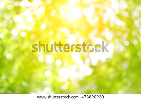 Blur circle bokeh green leaf background. Blurry yellow leaves rays light flare nature backdrop. Abstract blurred scene for web advertising. Soft focus foliage during summer with sunbeam wallpaper.