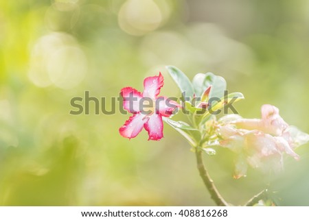 Blur flower background