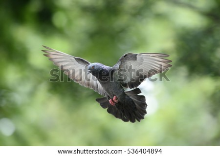 blur flying pigeon with beautiful sunbeam background