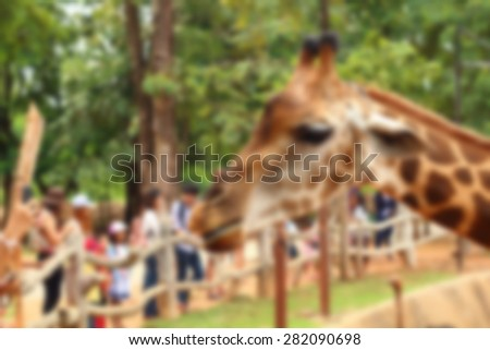 Blur Giraffes live in zoos - stock photo