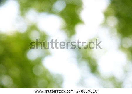 blur green background from tree in sun light