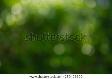 Blur Green trees,Green bokeh - stock photo