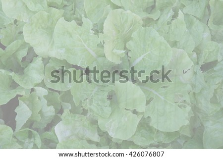 Blur green vegetable food in the garden abstract background