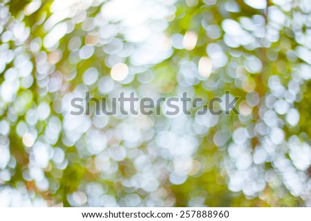 blur image of palm tree and bokeh from sunlight