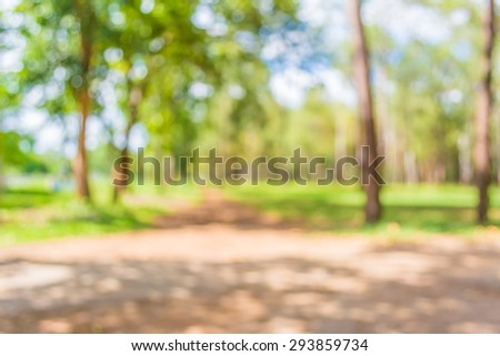blur image of pine tree forest on day time for background usage. - stock photo
