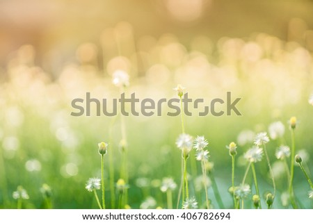 blur Natural flower outdoors bokeh background in green and yellow tones