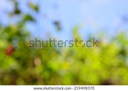 blur nature background - stock photo